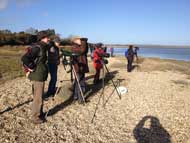 Birdwatching at Pagham Harbour