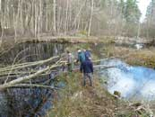 Removing fallen trees from pond at Swinley Brick Pits